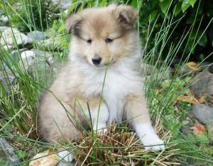 Layla 8 weken